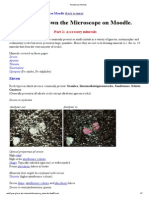 Accessory Minerals