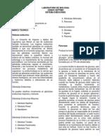 Practica de laboratorio glandulas endocrinas mayores y menores para 7°