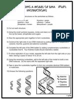 DNA Model (Cut-out sheet)