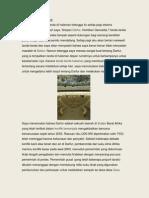 Contoh Artikel Konflik Darfur