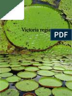 Victoria Regia -1