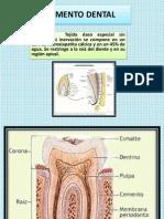 diapositiva cemento dentario