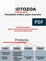 2. Protozoa usus.ppt