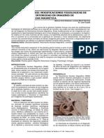 hipofisis.pdf