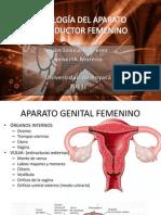 HISTO REPRODUCTOR FEMENINO