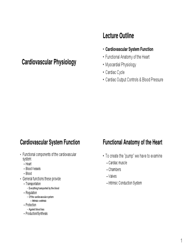 Cardiovascular Physiology 1 Muscle Contraction Heart