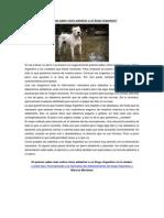 Adiestrar a Un Dogo Argentino