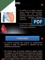 Arritmias Cardiacas Andrea Osses (2) (1) + Respiratoria