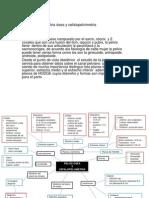 Pelvis Osea y Cefalopelvimetria