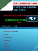 BCM 13 CHI Cilios