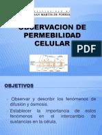 Permeabilidad Celular