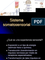 Sistemasomatosensorial (2)
