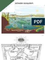 A Pondfish ecosystem.ppt