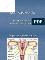 Genitalia Wanita