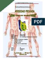 ANATOMIA Y FISIOLOGIA PATOLOGÍA DEL SISTEMA MUSCULAR-TRABAJO MONOGR