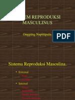 Kuliah Situs Urogenitalis
