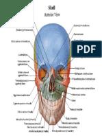 Clinical Atlas Of Human Anatomy Pdf