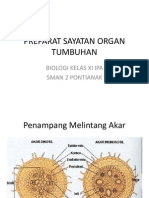 Preparat Sayatan Organ Tumbuhan
