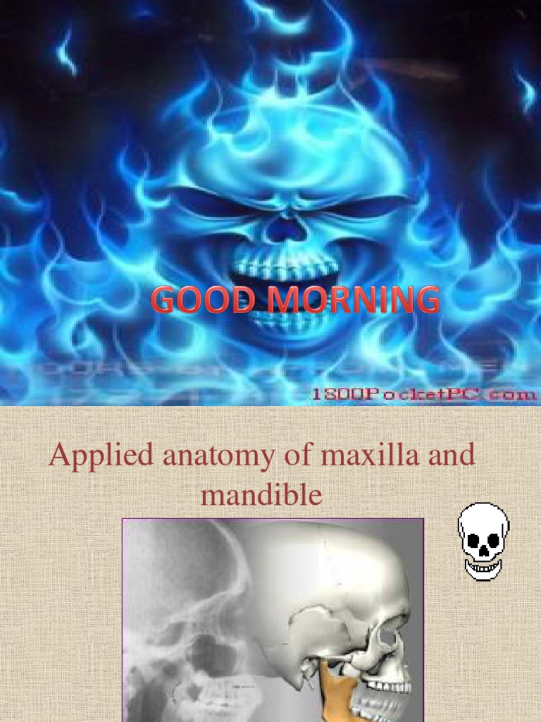 Applied Anatomy of Maxilla and Mandible Repeat | Skull | Skeletal System