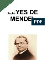 Clase de Leyes de Mendel