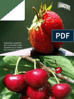 fructelecantec