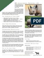Black Rhino Species
