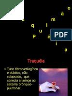TRAQUÉIA  E  PULMÕES
