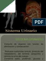 sistema urinario.pptx
