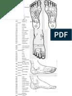 Planse Reflexologie de Picior