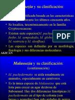 malassezia