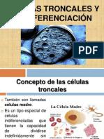 CELULAS TRONCALES (1)