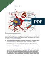 Discuss the Neuron as t1