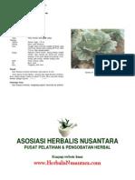 Brassica rapa L. (Sawi Putih)