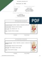 MS - Mão - Musculos