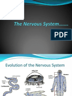 Nervous System Pp t