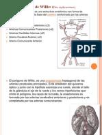 poligonowillis-090514080800-phpapp02