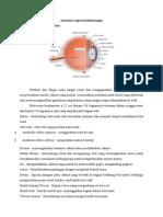 Anatomi Organ Keseimbangan