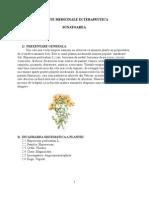 plante medicinale-sunatoarea-