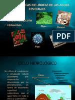 Presentación TAREA PRACTICA MEZQUITAL17 AL 27 IMPACTO AMBIENTAL