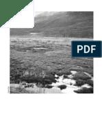 Turbales de La Patagonia - Parte II