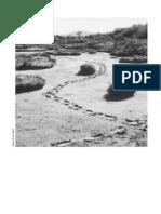 Turbales de La Patagonia - Parte IV