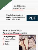 tronco-cerebral-1226196309261085-9