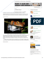 10 animais estranhos descobertos nos últimos tempos - blogandooblog