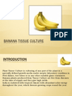 Ppt Banana TC (1)