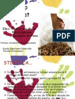 Stop Fumat (10A)