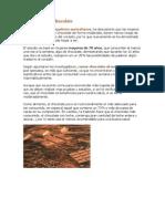 Beneficiosdelchocolate.pdf