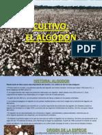 el-algodon-1225295221416807-8