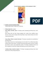 Anatomi Dan Fisiologi Special Sense
