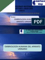 01 EMBRIOLOGÍA. ANATOMÍA, HISTOLOGÍA. FISIOLOGÍA RENAL, ACTUALIZACIÓN Y MÉTODOS PARA DTERMINAR FUNCI (2)