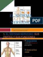 elsistemanervioso-100517142601-phpapp01
